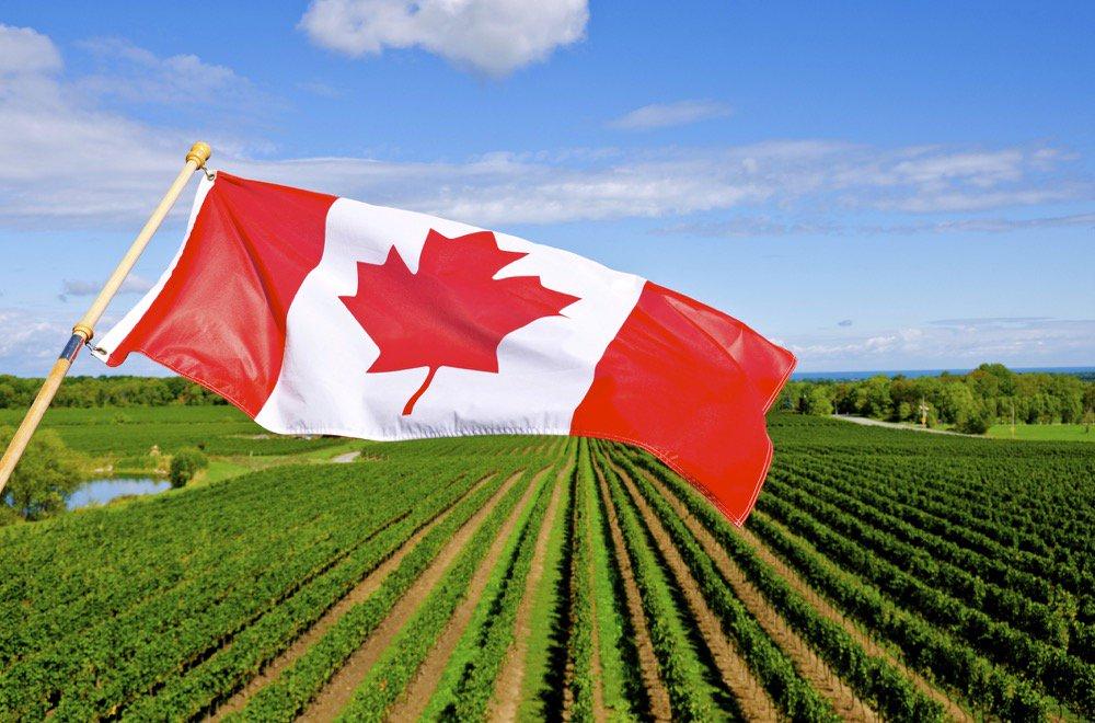 """厉害了!加拿大新推""""农业工移民"""",干农活也能拿枫叶卡!插图"""